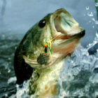 10 Bass Fishing Tips, Tricks And Pointers