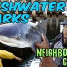 FRESHWATER SHARKS in Community CANALS!!! + Bloopers