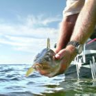 Capture, launch and useless? How and how prolonged you tackle fish decides their destiny
