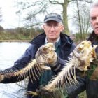 Fishery places up fences all over lake to prevent fish currently being slaughtered by otters