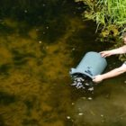 1000's of fish introduced into river as it recovers from 'worst pollution' recorded