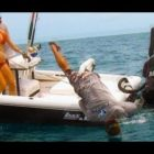 Humorous Fishing – Hunter will get Pulled Overboard by Big Fish! – Goliath Grouper Pulls Person Overboard