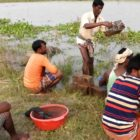 BESTOF PRIMITIVE FISHING Applications | Minor Entice FOR #FISHING | BENGALI FISHING System