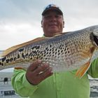 Drums on a roll at Calaveras soon after crappie wall fishing ban