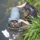 34,000 fish reintroduced into River Witham in Lincolnshire