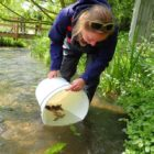 Brown trout and endangered crayfish rescued from river air pollution