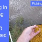 Fishing Strategies for Spring – Feed Cautiously to Capture Additional Carp