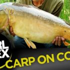 How to tie a easy corn rig for carp fishing