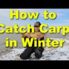 How to capture carp in the wintertime – chilly weather conditions carp fishing and bait