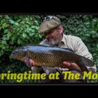 Springtime Carp Fishing – The Moat