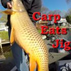 Substantial Carp Caught Bass Fishing