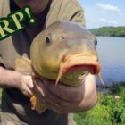 Carp fishing with 7 days previous bait!!!