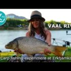 Carp fishing experiment at Vaal River, South Africa (Dec 2018) – To dip or not to dip?