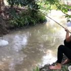 Stunning Woman Fishing Large Gourami Fish in a Small River