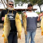 Researchers elevate worries with Nationwide Carp Management Prepare making use of herpes virus