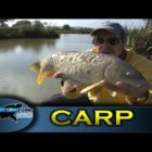 Float fishing for carp with cat foods bait – Collection one- Episode four