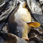 **Evening Fishing** for Canal Carp: Deterring The Bream with Particle