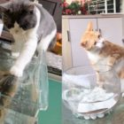 Cats Respond to Humorous Fish – Humorous Cat and Fish Response Compilation
