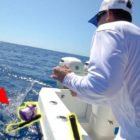 Big Fish Snaps and Steals $1000 rod… EPIC Fishing Are unsuccessful