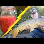 How to Capture Carp – Most effective Bait Recipe: Treated Corn