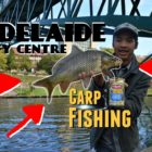 CARP FISHING IN THE ADELAIDE Metropolis CENTRE!   Easy, Inexpensive &amp Simple