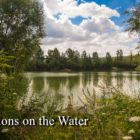 Carp Fishing in France : Reflections on the Drinking water – Croix Blanche Lakes.