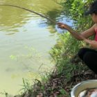 Primitive Survival Female Fishing For Large Catfish