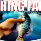 Fall short!  Initially Try at Hand Lining or Noodling (Large CATFISH) Amusing fishing recommendations