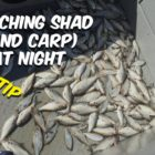 In which To Capture Shad (and Carp) At Evening [Quick Tip]