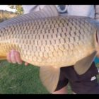 Winter season Carp Fishing in the Western Cape – South Africa