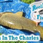 Catching Carp In The Charles River