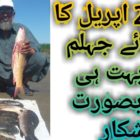 Jhelum River Fishing|Carp Fishing in Pakistan|Attractive Fishing By Our Good Club 10th April 2019