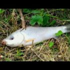 Common Fishing BD | Grass Carp &amp Rohu Fish Catching With Hook | Wonderful Fishing With Rod &amp Reel