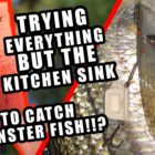 Catching Monster Fish on Kitchen area Sink Entice