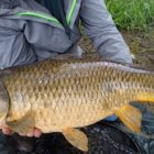 Carp Fishing in Rivers – How to Capture Carp in Rivers – River Fishing for Carp
