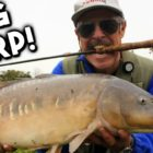 Even Larger Carp on the Fly! | TAFishing
