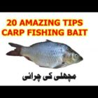 Best 20 Incredible CARP FISHING BAIT Suggestions 2019