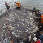 The Battle Versus Asian Carp: The Unified Approach