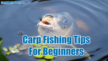 Carp Fishing Tips For Beginners