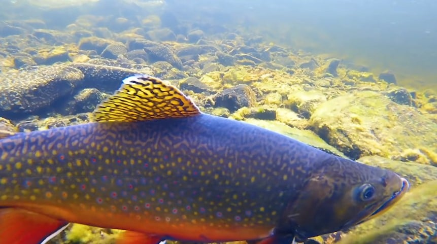 Finding trout while river fishing