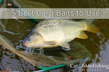 5 best carp baits to use