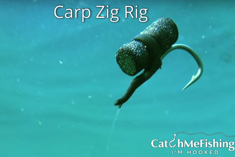the best carp bait a zig rig