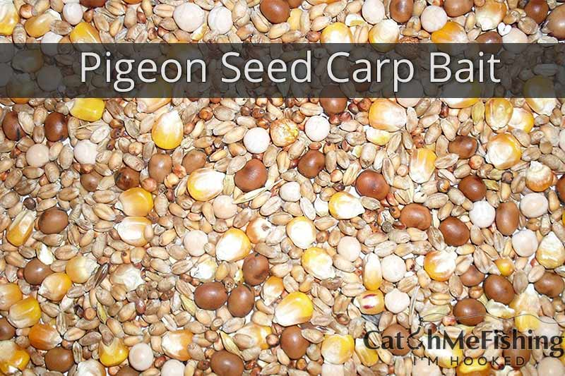 pigeon seed as a great carp fishing bait