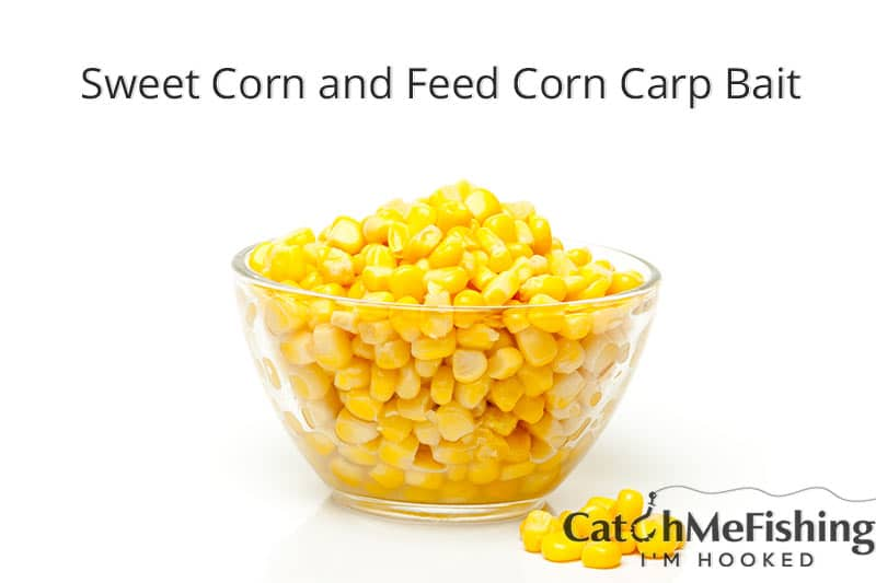 the best carp bait sweet corn and feed corn
