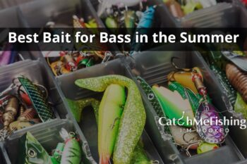 Best bait for bass in the Summer