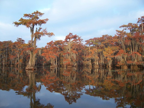 Caddo Lake Lakes in Texas