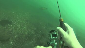 Man Catches Bass with Fishing Rod While Scuba Diving Fishing