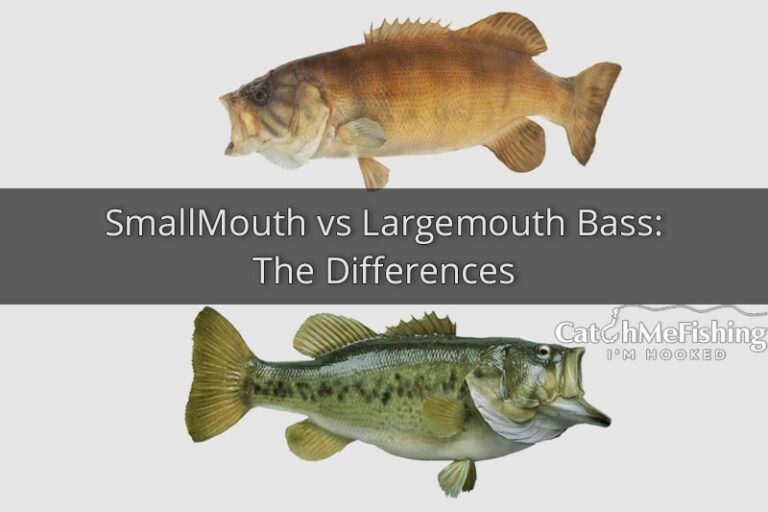 Smallmouth vs Largemouth Bass The Differences