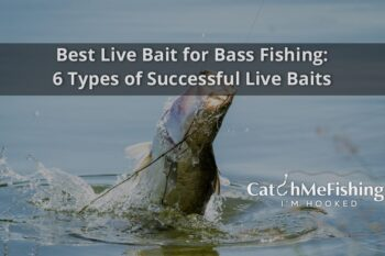 Best Live Bait for Bass Fishing 6 Types of Successful Live Baits