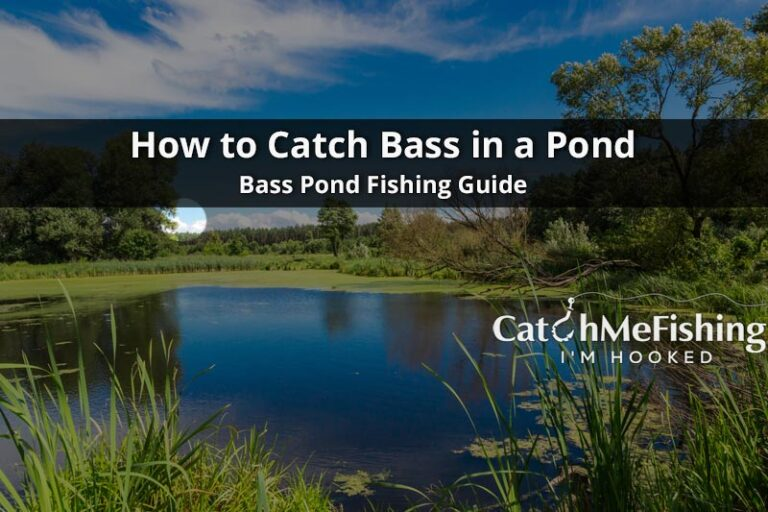 How-to-Catch-Bass-in-a-Pond-Best-Bass-Pond-Fishing-Guide